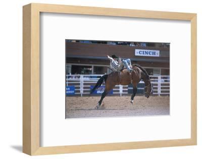 Rodeo at Calgary Stampede, Calgary, Alberta, Canada--Framed Art Print