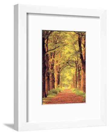 Forest Path--Framed Art Print