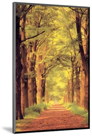 Forest Path--Mounted Art Print