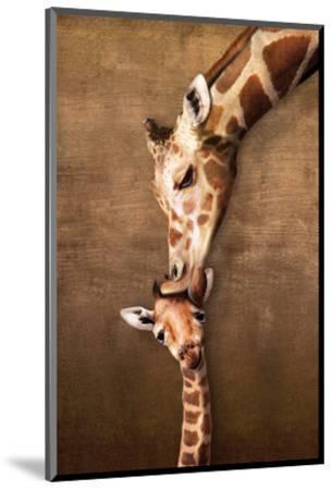 Giraffe Mother's Kiss--Mounted Art Print