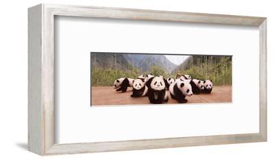 Panda Cubs--Framed Art Print