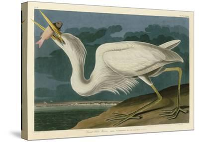 Great White Heron-John James Audubon-Stretched Canvas Print