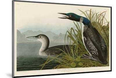 Great Northern Diver or Loon-John James Audubon-Mounted Art Print