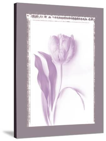 Tulip Shadow I-Bill Philip-Stretched Canvas Print