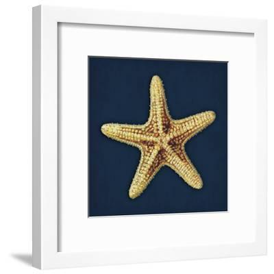 Star Fish Navy-Jace Grey-Framed Art Print