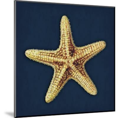Star Fish Navy-Jace Grey-Mounted Art Print