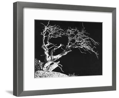 Bodi Tree-Albert Koetsier-Framed Art Print