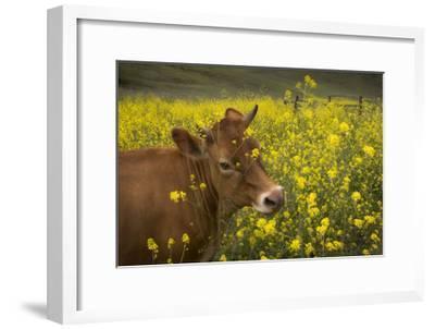 Jersey in Oregon-David Winston-Framed Giclee Print