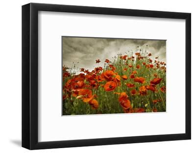 Bobbi's Poppies-David Winston-Framed Giclee Print