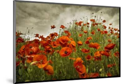 Bobbi's Poppies-David Winston-Mounted Giclee Print