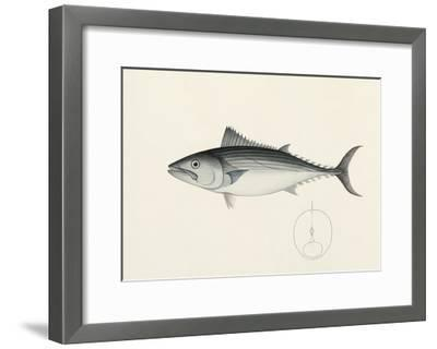 Fish Study in Blue and Grey- Oriental School-Framed Premium Giclee Print