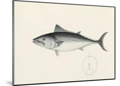 Fish Study in Blue and Grey- Oriental School-Mounted Premium Giclee Print