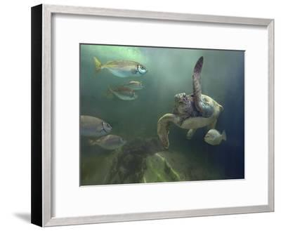 Green Sea Turtle and fish, Sabah, Malaysia-Tim Fitzharris-Framed Art Print