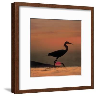 Little Egret silhouetted at sunset, Africa-Tim Fitzharris-Framed Art Print