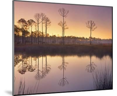 Pineland at Piney Point near Hagen's Cove, Florida-Tim Fitzharris-Mounted Art Print