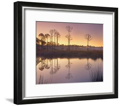 Pineland at Piney Point near Hagen's Cove, Florida-Tim Fitzharris-Framed Art Print