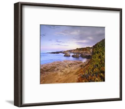 Ice Plant growing on cliffs at Bean Hollow Beach, California-Tim Fitzharris-Framed Art Print