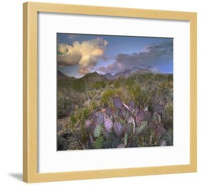 Opuntia cactus, Chisos Mountains, Big Bend National Park, Texas-Tim Fitzharris-Framed Art Print