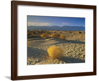 Mesquite Flat Sand Dunes, Death Valley National Park, California-Tim Fitzharris-Framed Art Print