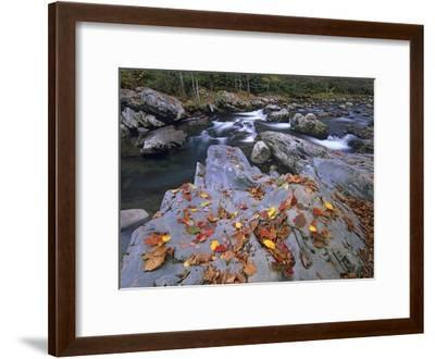 Little Pigeon River, Great Smoky Mountains National Park, Tennessee-Tim Fitzharris-Framed Art Print