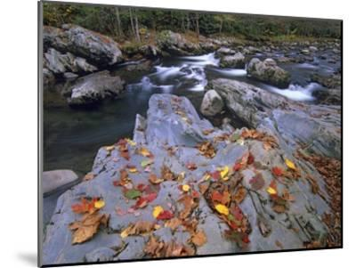 Little Pigeon River, Great Smoky Mountains National Park, Tennessee-Tim Fitzharris-Mounted Art Print