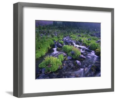 Paradise River with wildflowers, Mount Rainier National Park, Washington-Tim Fitzharris-Framed Art Print