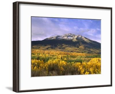 East Beckwith Mountain and trees in fall color, Gunnison National Forest, Colorado-Tim Fitzharris-Framed Art Print