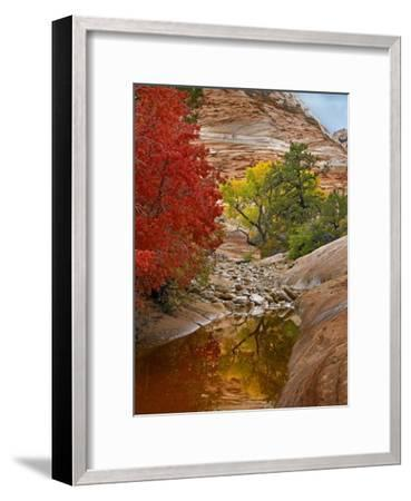 Maple and Cottonwood autumn foliage, Zion National Park, Utah-Tim Fitzharris-Framed Art Print