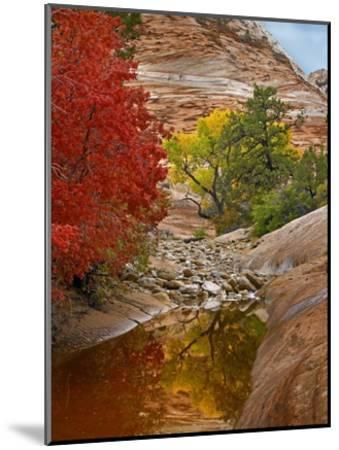 Maple and Cottonwood autumn foliage, Zion National Park, Utah-Tim Fitzharris-Mounted Art Print