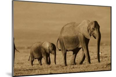 African Elephant mother and calf, Kenya - Sepia-Tim Fitzharris-Mounted Art Print