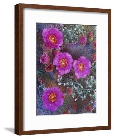 Beavertail Cactus flowering, North America-Tim Fitzharris-Framed Art Print