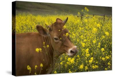 Jersey in Oregon-David Winston-Stretched Canvas Print