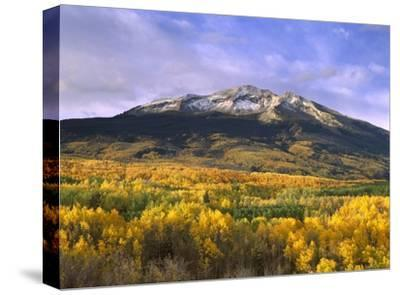 East Beckwith Mountain and trees in fall color, Gunnison National Forest, Colorado-Tim Fitzharris-Stretched Canvas Print