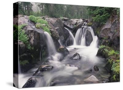 Paradise River cascade, Mt Rainier National Park, Washington-Tim Fitzharris-Stretched Canvas Print