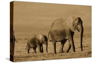 African Elephant mother and calf, Kenya - Sepia-Tim Fitzharris-Stretched Canvas Print