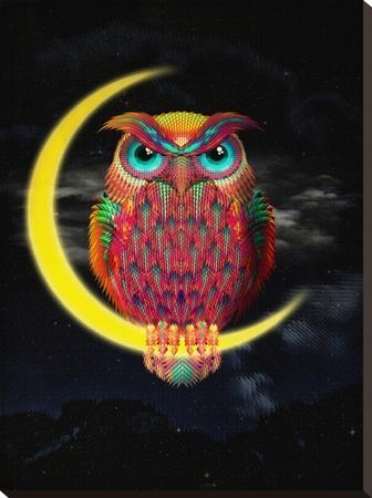 Owl-Ali Gulec-Stretched Canvas Print