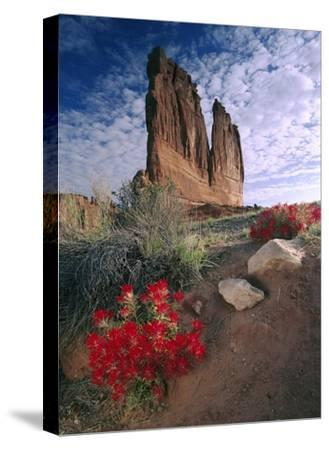 Paintbrush and the Organ Rock, Arches National Park, Utah-Tim Fitzharris-Stretched Canvas Print