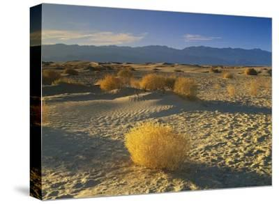Mesquite Flat Sand Dunes, Death Valley National Park, California-Tim Fitzharris-Stretched Canvas Print