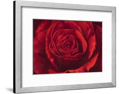 Passione-Stefania Re-Framed Giclee Print