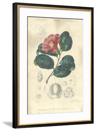 Floral Botanique II-N.Charles D'Orbigny-Framed Giclee Print