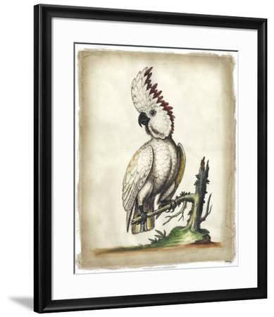 Edwards' Cockatoo-George Edwards-Framed Art Print