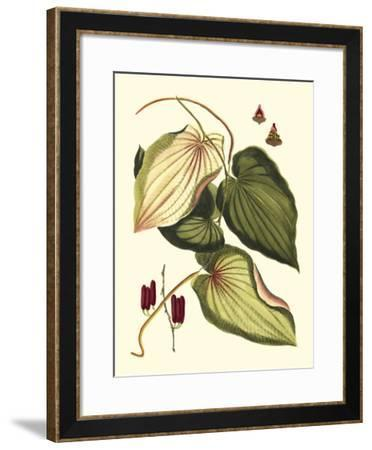 Buchoz Leaves III--Framed Giclee Print