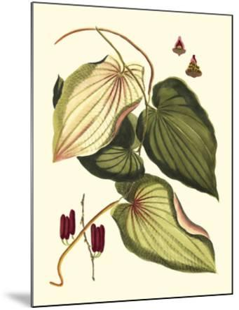 Buchoz Leaves III--Mounted Giclee Print