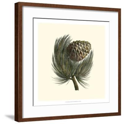 Pignon Pine--Framed Giclee Print