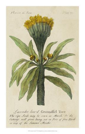 Gardener's Guide IV--Framed Giclee Print