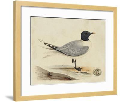 Meyer Shorebirds I-H^ l^ Meyer-Framed Giclee Print