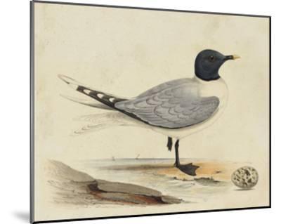 Meyer Shorebirds I-H^ l^ Meyer-Mounted Giclee Print