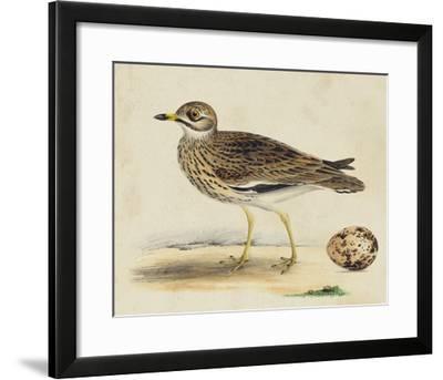 Meyer Shorebirds IV-H^ l^ Meyer-Framed Giclee Print