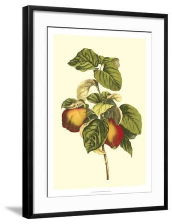 Bessa Pear-Bessa-Framed Giclee Print