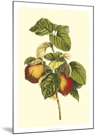 Bessa Pear-Bessa-Mounted Giclee Print